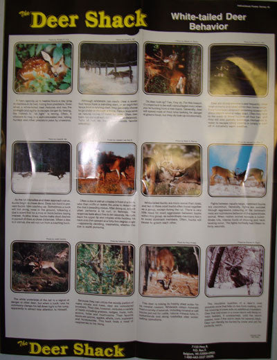 Whitetail Deer Behavior Guide Poster - Deer Shack