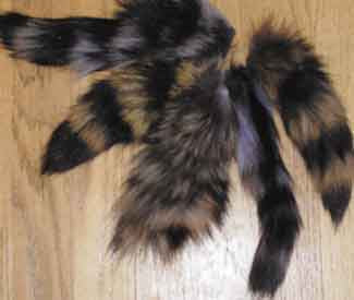 Raccoon Tails- 1 Dozen Small - Deer Shack