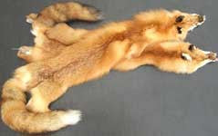 Red Fox Pelt - Deer Shack