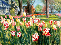 Peppermint Stripes On Tulip Lane Giclee
