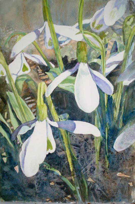Snowdrops Giclee