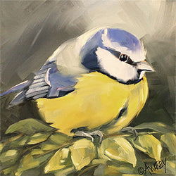 Blue Titmouse Giclee