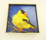 Gold Finch on Blue Framed Giclee