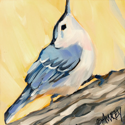 White Breasted Nuthatch 1 Oil Painting