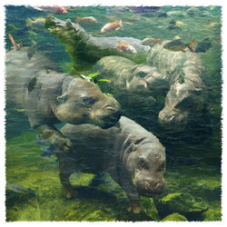 Water Ballet Hippos Giclee