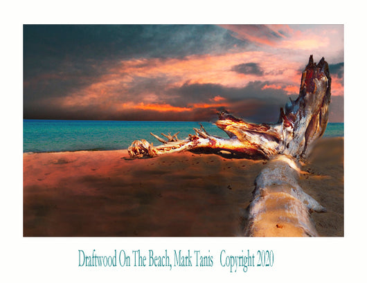 Driftwood On The Beach Giclee