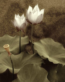 Waterpaper Lotus II Giclee