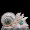 Pacific Opal Shell Cluster Keepsake Box Featuring Swarovski © Crystal