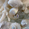 Queen Clam Shell  Centerpiece Featuring Swarovski ® Crystal & Natural Sea Life