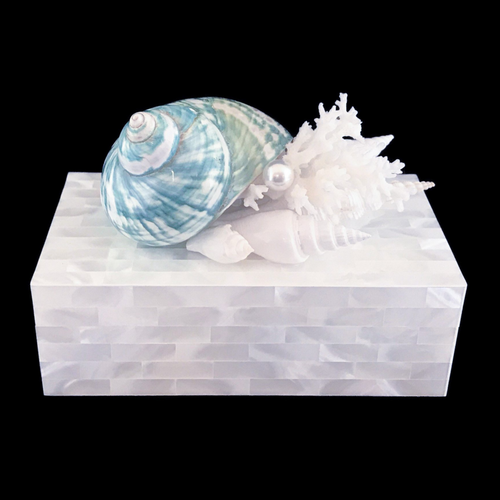 Mother of Pearl Jade Turbo Shell & Coral Jewelry Box