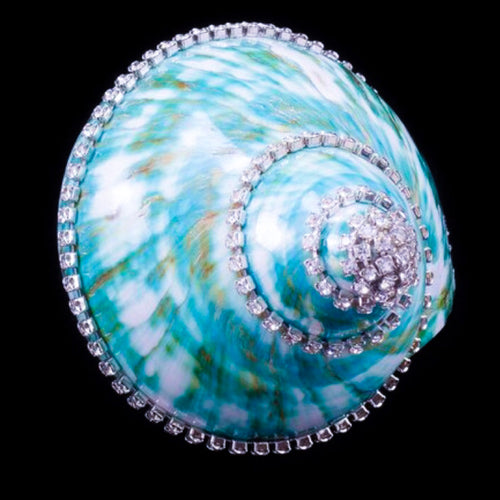 Jade Turbo Seashell Collectible with Swarovski © Crystals | Large