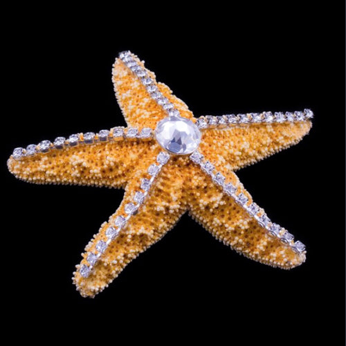Natural Sugar Starfish Featuring Clear Swarovski © Crystals