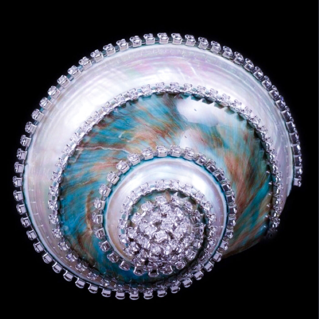 Banded Jade Turbo Seashell Collectible with Swarovski © Crystals