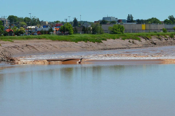 You can surf anywhere in Canada - Geoff Ortiz on the tidal bore. Photo by Katie Ortiz.