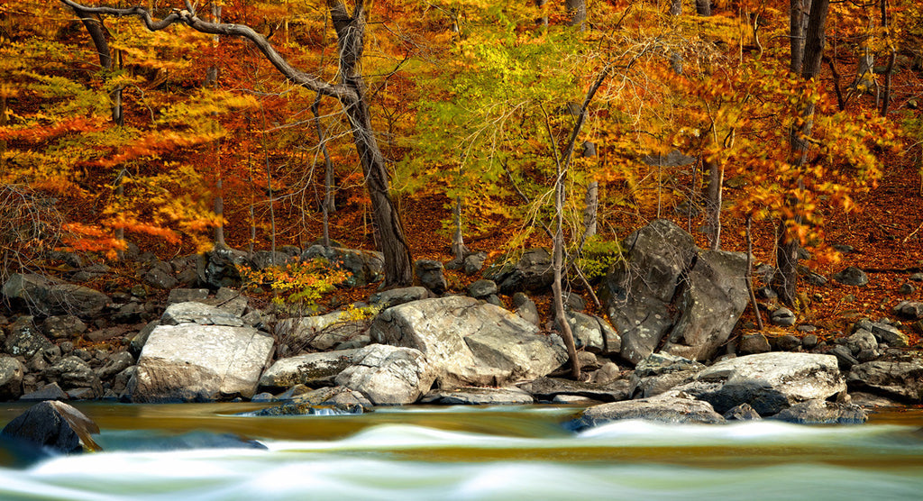Autumn Along The Banks / 48 x 24 / photograph printed on giclée canvas