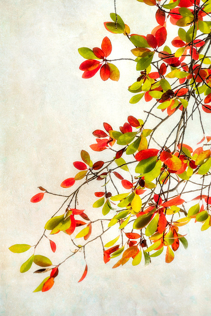 Turning Leaves II / 36 x 24 / photography