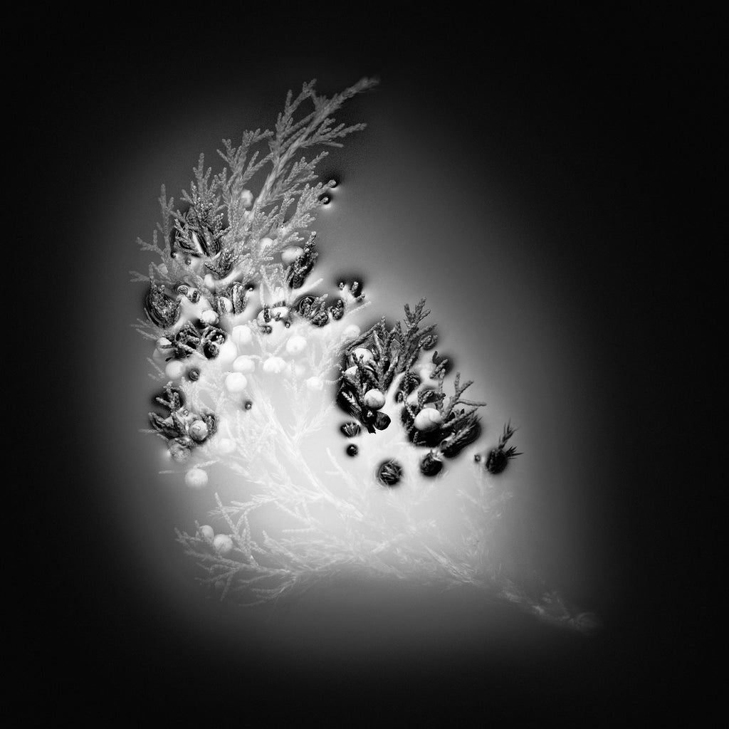 Winter Green; black and white photography of foliage in water. By Chris Raecker
