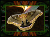 Polyphemus Moth on Bird of Paradise
