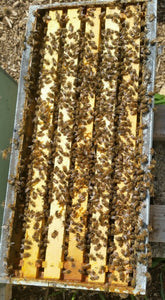 5 Frame Bee Nucs For Sale