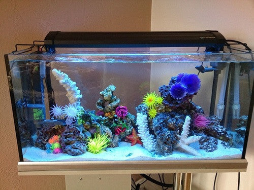 The Easiest Way to Setup a Saltwater Aquarium: Part 1