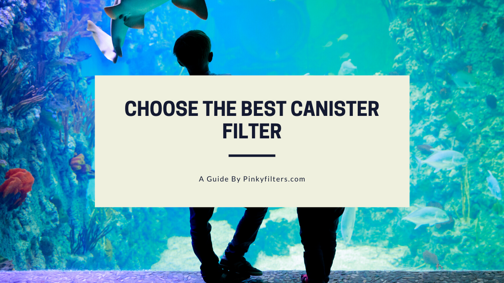 How to Choose the Best Canister Filter for Your Aquarium