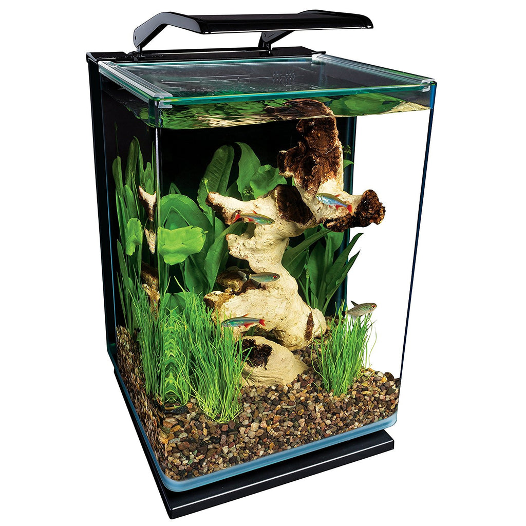 Care for an Acrylic Aquarium Kit