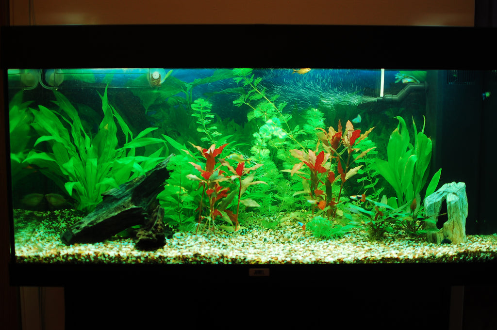 Understanding Aquarium Filtration: Different Types of Filters to Consider