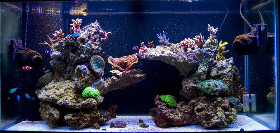 The Easiest Way to Setup a Saltwater Aquarium: Part 2