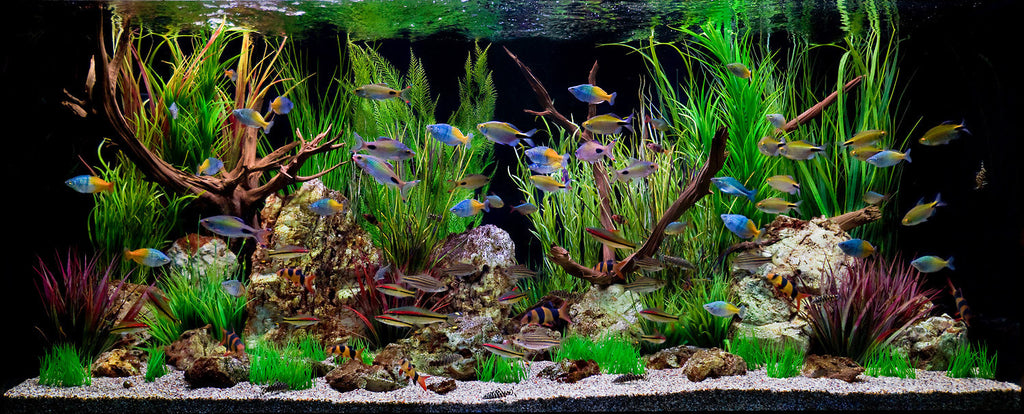Caring for Freshwater Aquariums
