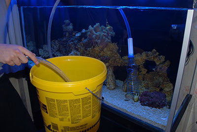 The Easiest Way to Setup a Saltwater Aquarium: Part Three