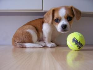 5 Tips for Bringing Your Puppy Home