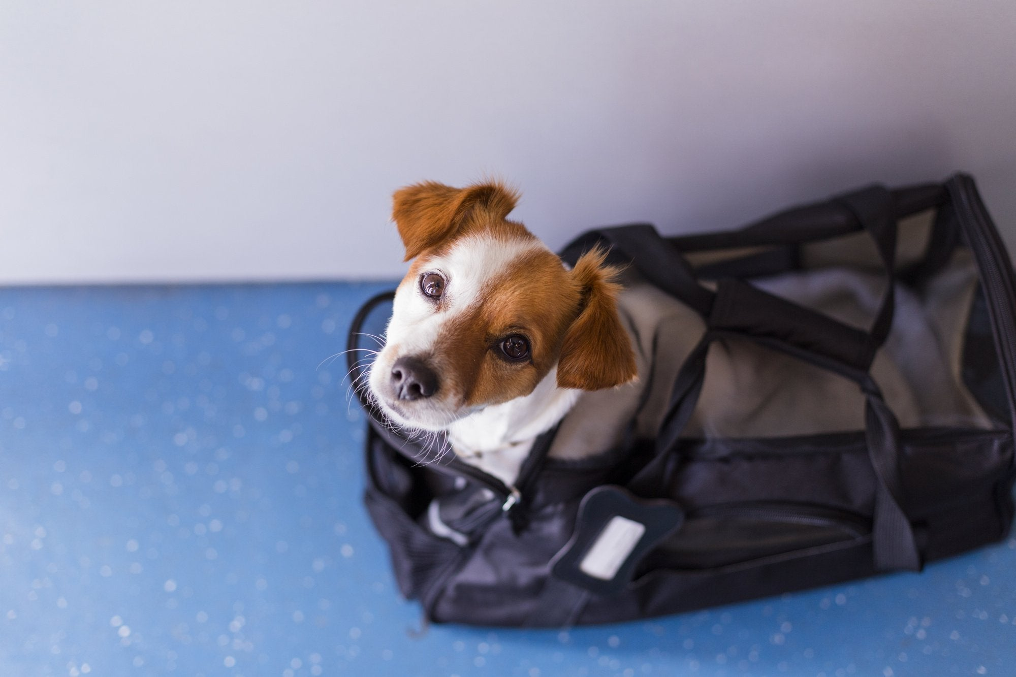 How to Choose the Best Airline Pet Carrier