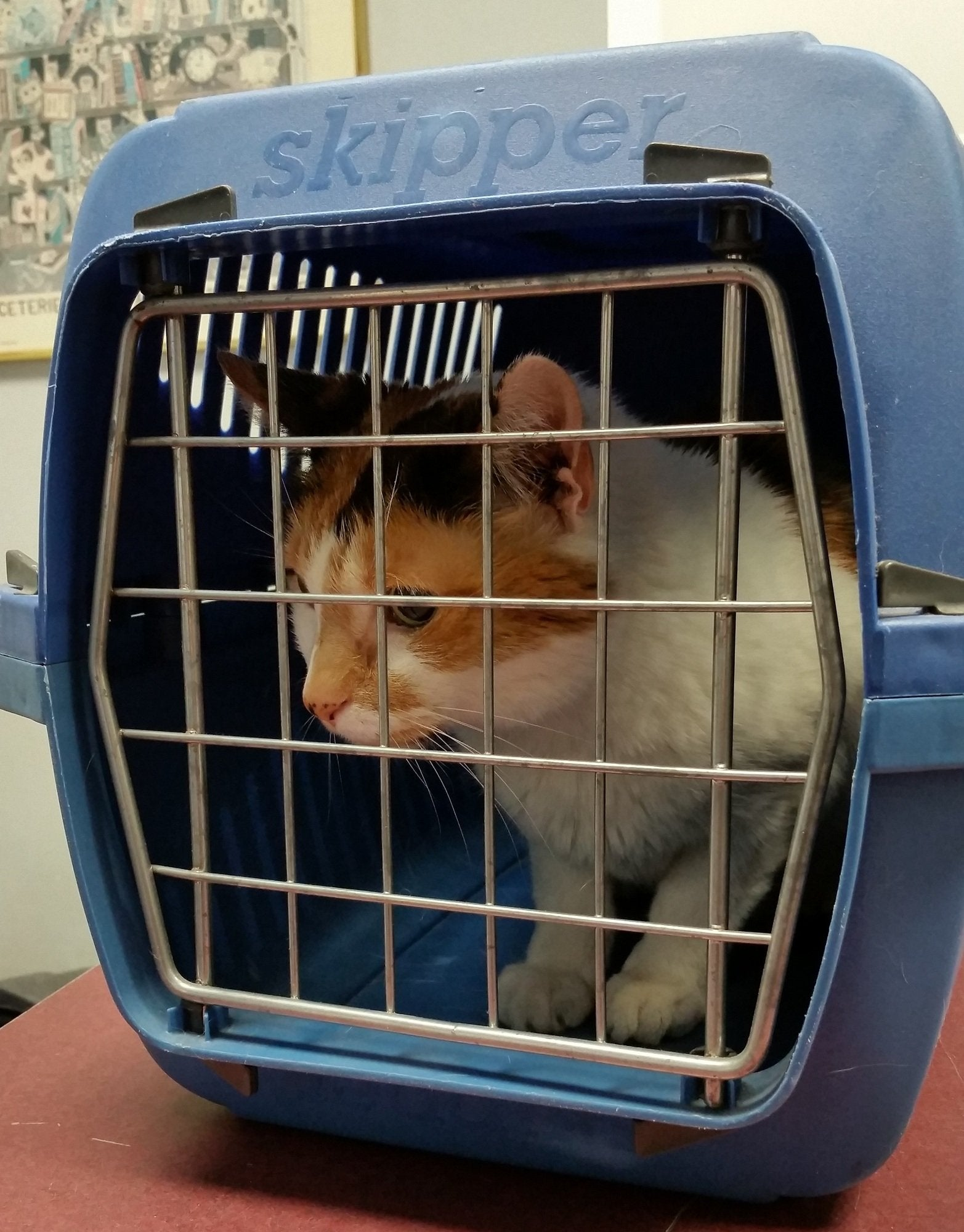 What are the Airline Requirements for Pet Carriers?