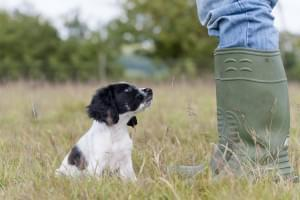 Puppy Training Tips: Teach Your Dog to Sit and Come