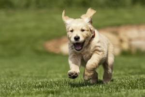 Bringing Your New Puppy Home: Puppy Playtime