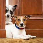 "Training Tips: Teach Your Dog to ""Leave It"""