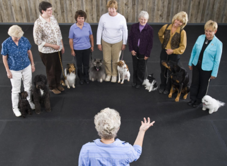 Tips for Dog Training at Home