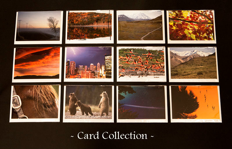 Card Collection