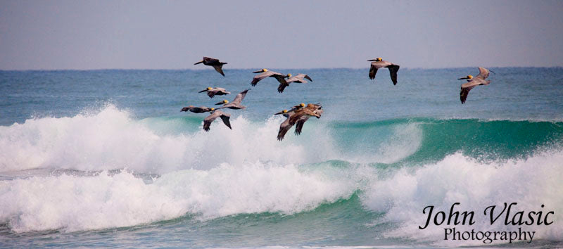 Pelican Waves