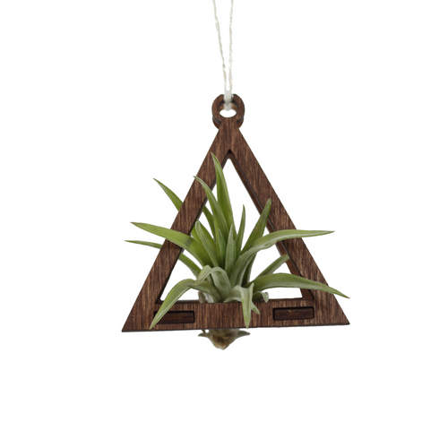 air plant ornament >> triangle >> walnut
