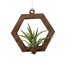 air plant ornament >> hexagon >> walnut