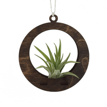 air plant ornament >> circle >> walnut