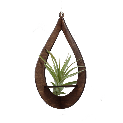 air plant hanger >> teardrop >> walnut