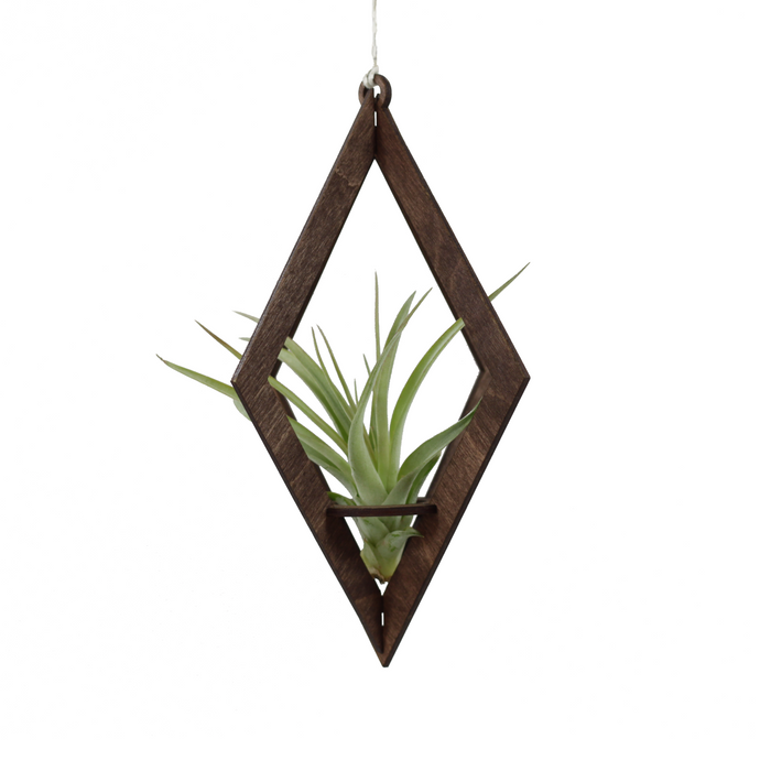 air plant hanger >> diamond >> walnut