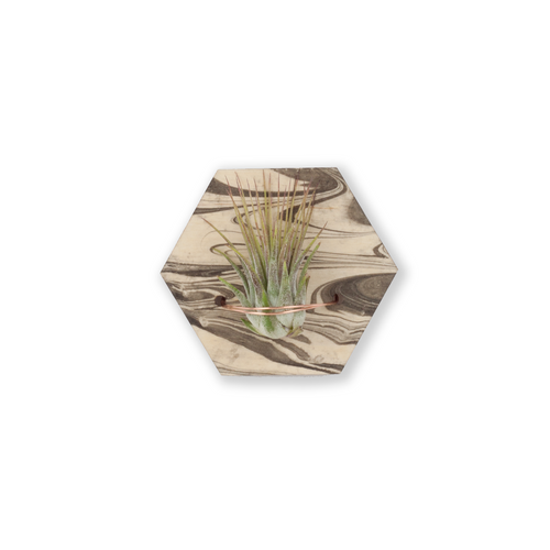 air plant magnet >> marbled wood >> laser cut hexagon design >> plant included