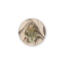 air plant magnet >> marbled wood >> laser cut circle design >> plant included