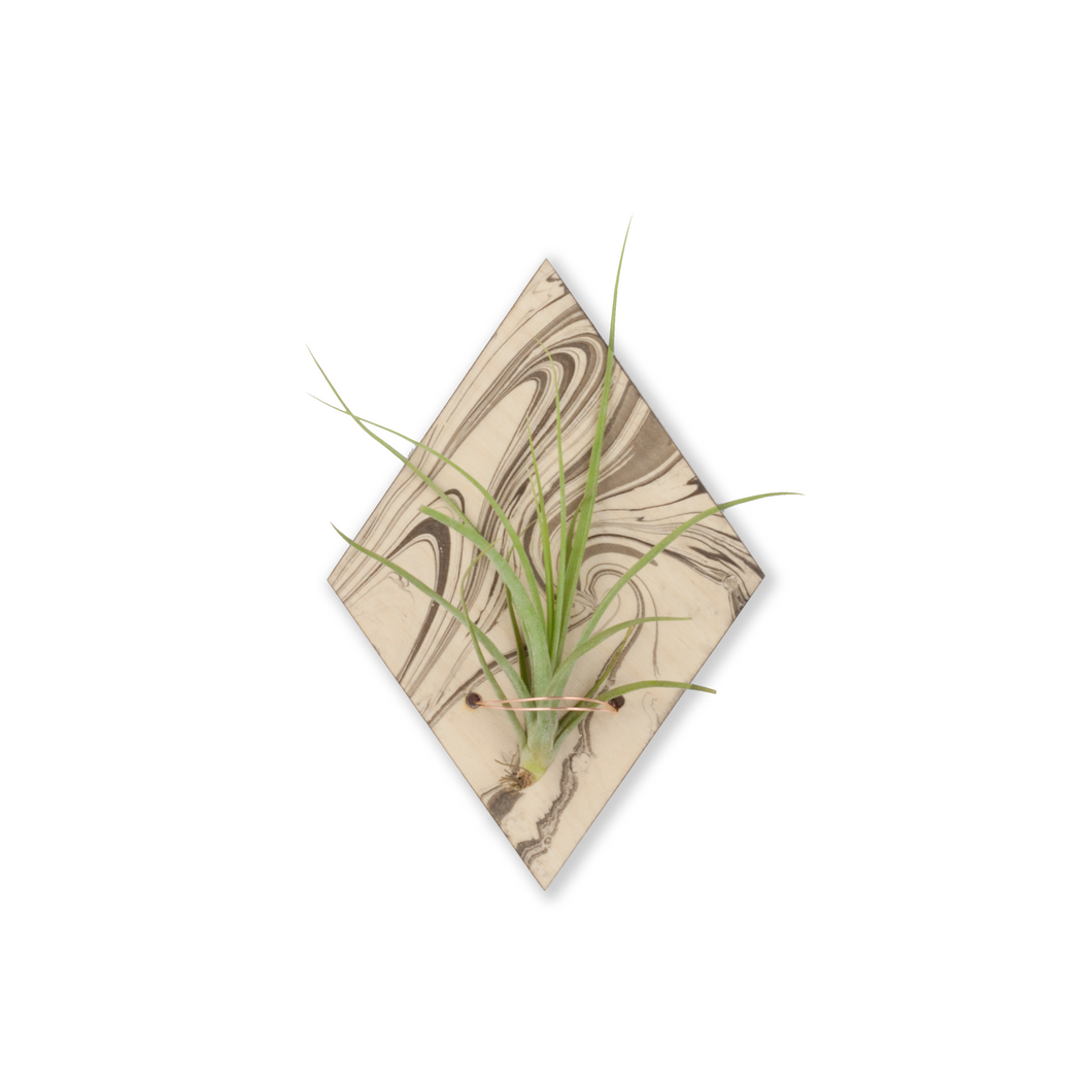air plant magnet >> marbled wood >> laser cut diamond design >> plant included
