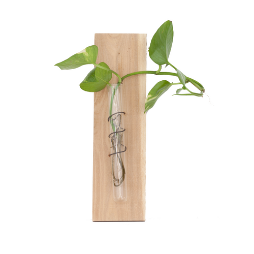 test tube vase >> wall hanger >> house plant propagation