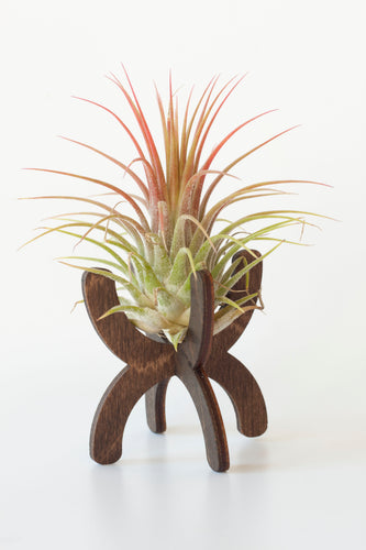 Desktop Air Plant Stand