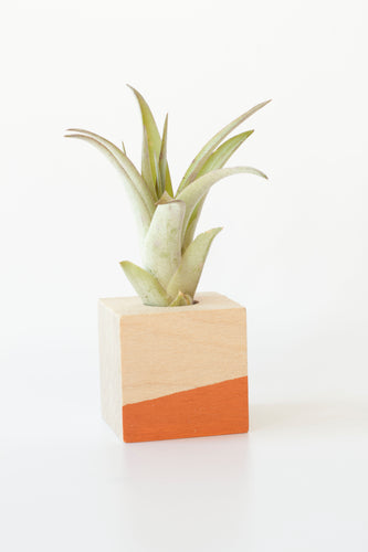 Air Plant Magnet >> Orange Cube
